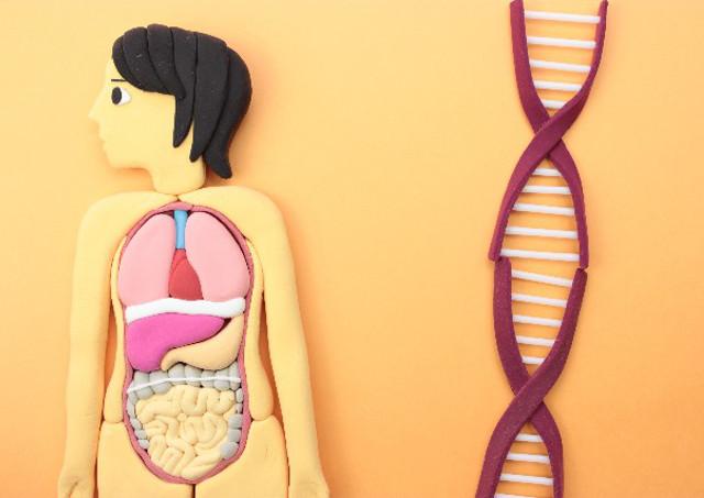 腸内環境は腸内細菌のバランスが大切